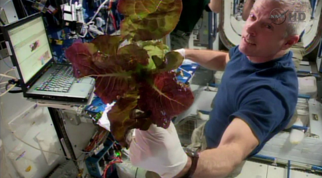 2014-06-10 Steve swanson w red romaine grown on the ISS.jpg