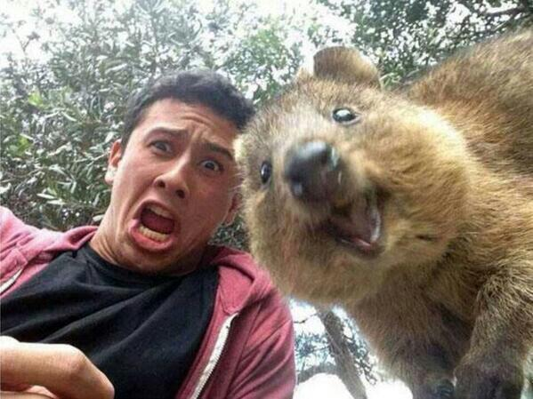 A Quokka, which one.jpg