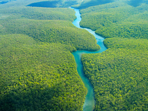 File:Amazon-rainforest (3).jpg