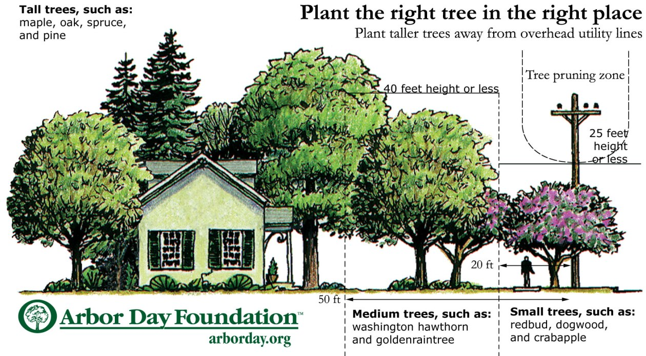 Arbor Day tree tips.jpg