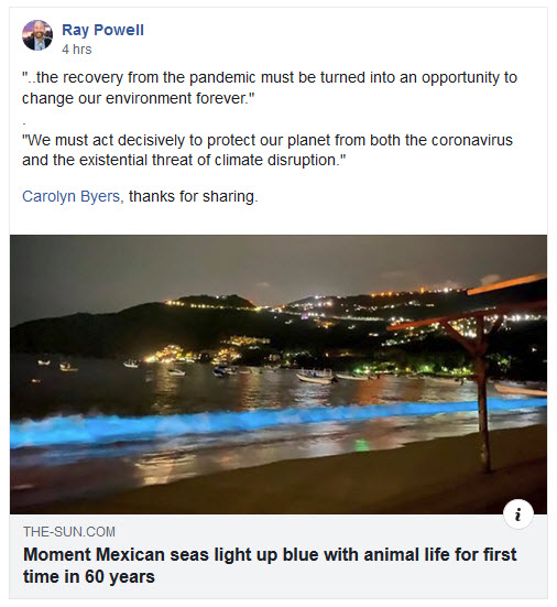 Blue bioluminescent plankton in Acapulco.jpg