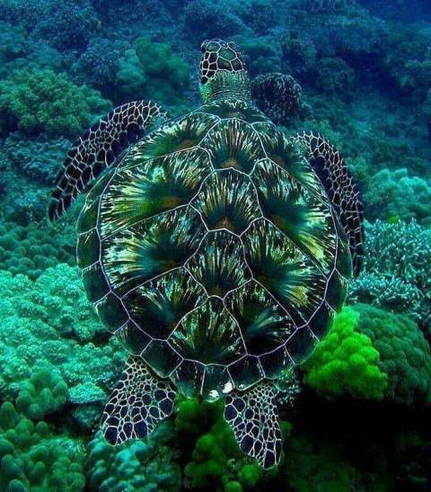 Blue green turtle - blue green world.jpg
