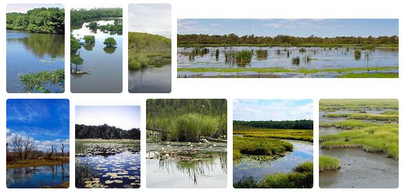 Coastal Intercoastal Wetlands.jpg
