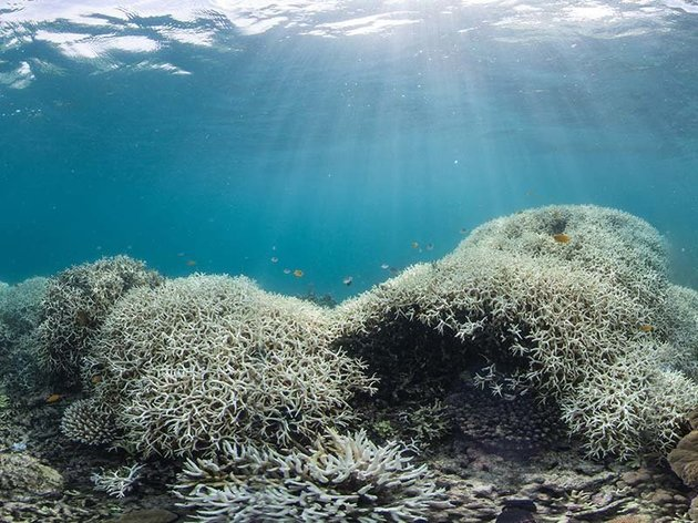 Coral bleaching Great Barrier Reef 2016.jpeg