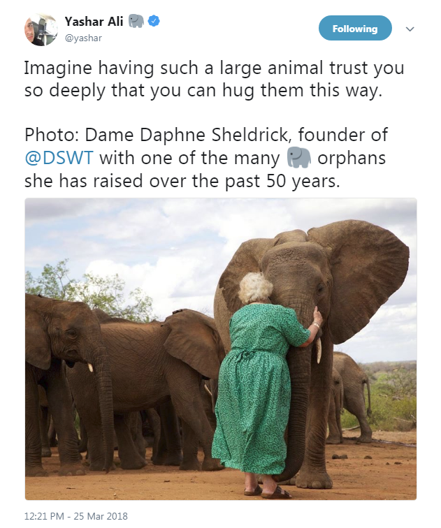 DSWT-Daphne hugging elephant adoptee.png