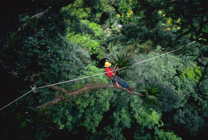 Don Perry In the Canopy first-gen canopy web.jpg