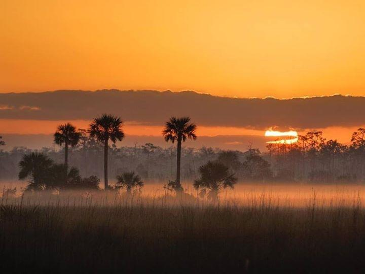 Everglades at Sunrise 2016.jpg