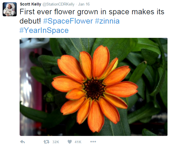 First ever flower grown in space.png
