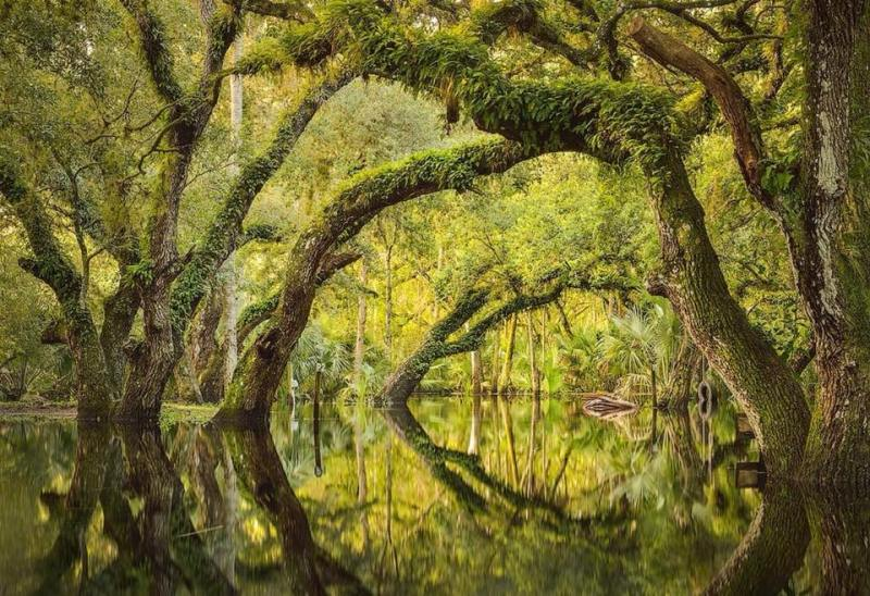 Flooded oak hammock Florida.jpg