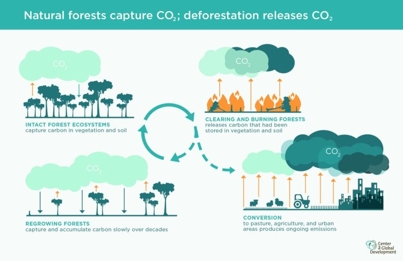 Forests and CO2.jpg