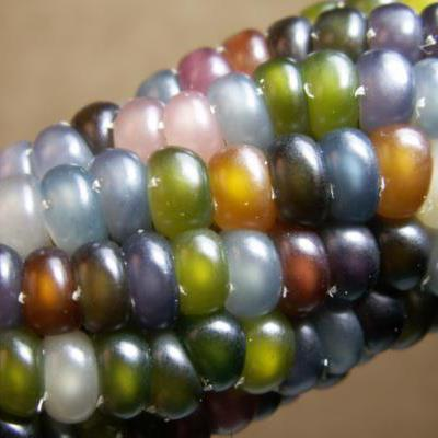 Glass Gem Corn.jpg