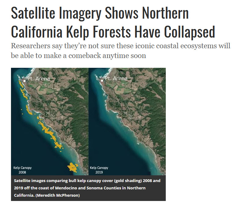Kelp forest off Calif coast collapsing.jpg