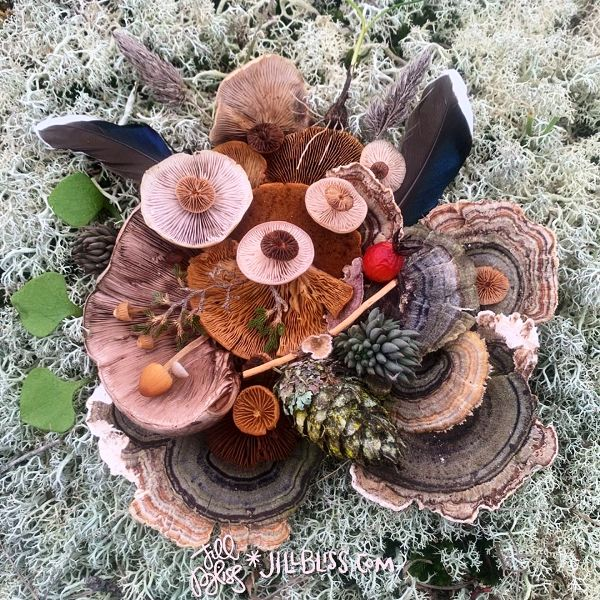 Mushrooms collected on a salish walk by jill bliss.jpg