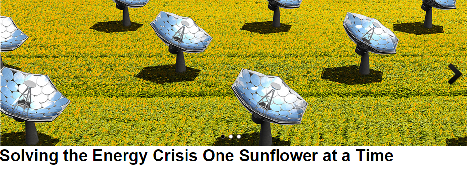 One Sunflower at a Time.png