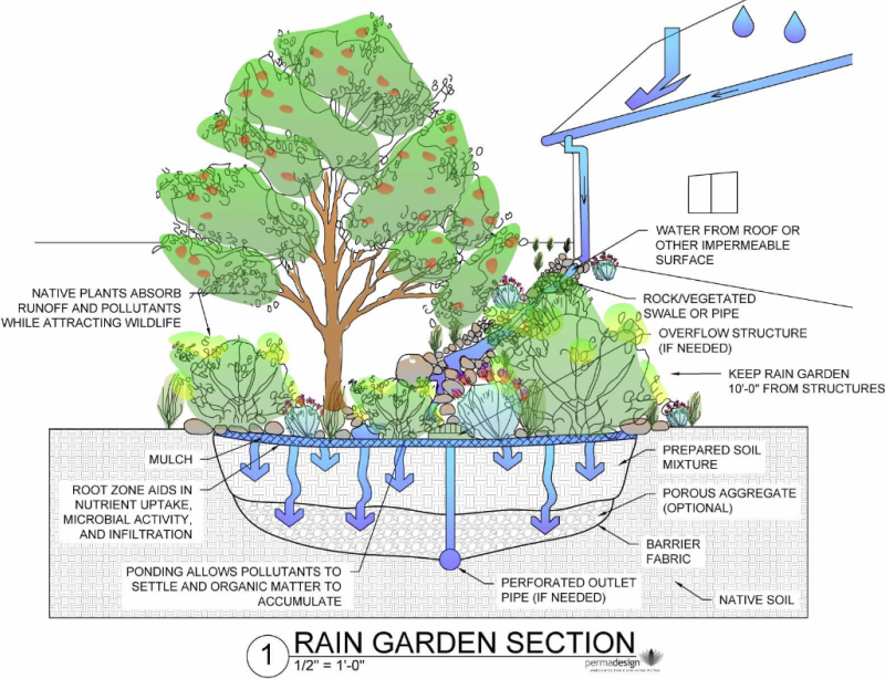 Rain Garden Design courtesy of www.PermaDesign.com Nate Downey.png