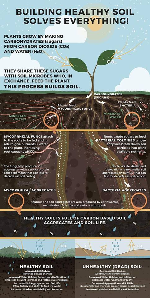 Soil is the root stuff.jpg