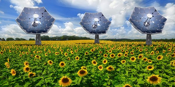 Solar sunflower designs.jpg