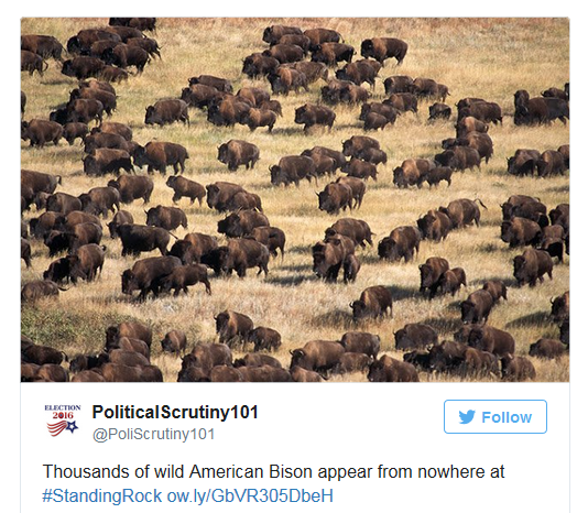 Standing Rock Bison appear.png