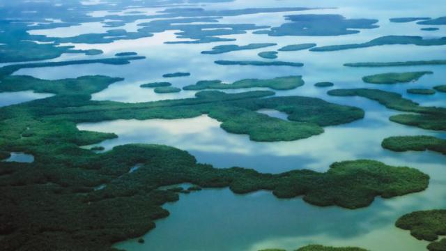 Ten thousand islands -- Marco island.jpg