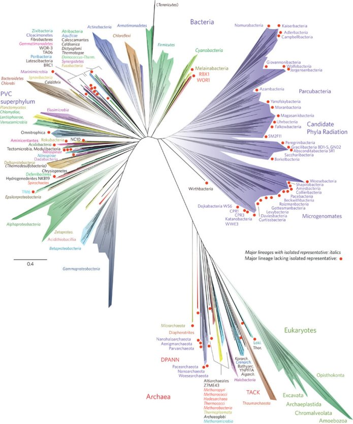 Tree of Life nmicrobiol201648-f1 via Nature.jpg