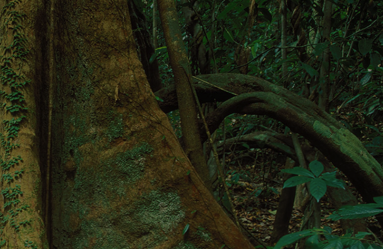 File:Tropical rainforest floor.png