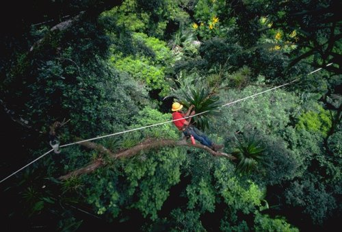 Zip in the Jungle Canopy.jpg